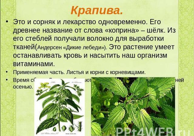 Сообщение про корень растений